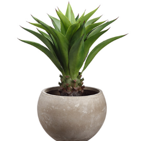 "Agave Attenuata in Fiber Clay Planter 34""H"