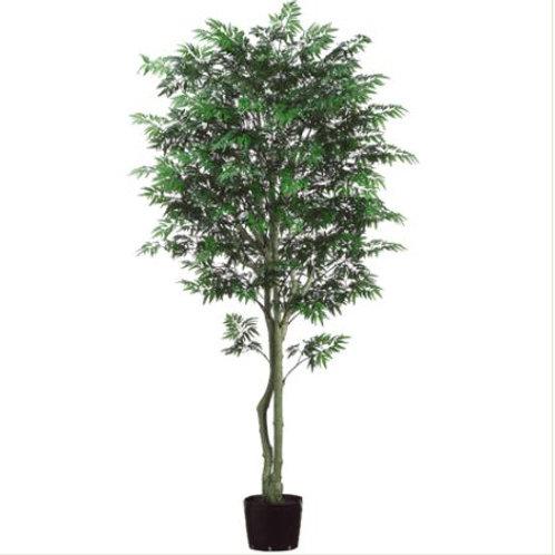 Aralia Tree 7'