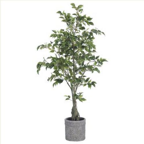 "Ficus Tree in Gray Planter 65"""