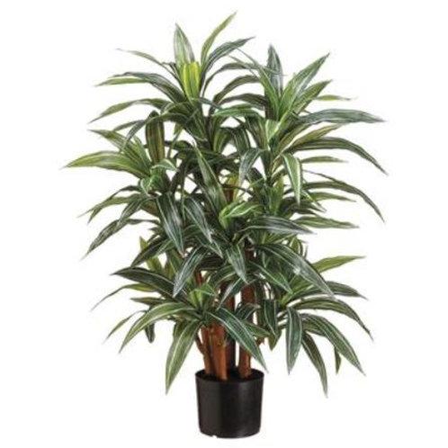 """Yucca Plant X4 GR/CR 33"""""""
