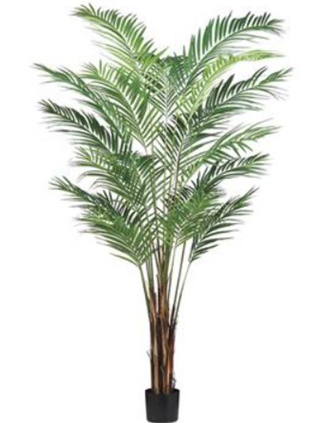 Areca Palm Tree in Pot 7FT