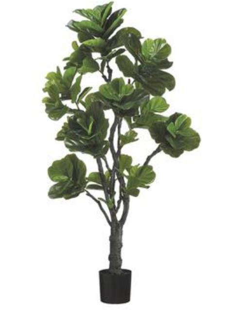 Eva Fiddle Plant W/144 LV 6'