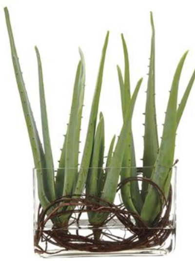 """Agave Twig in Glass Vase 19"""""""