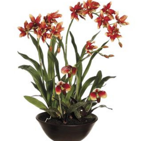 "Oncidium/Lady's Slipper Orchid in Terra Cotta Bowl 28"" $300."