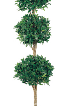 Triple Ball Sweet Bay Topiary 6'