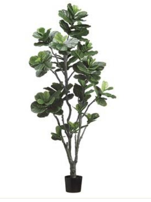 Fiddle Leaf Tree W/152 LVS 7'