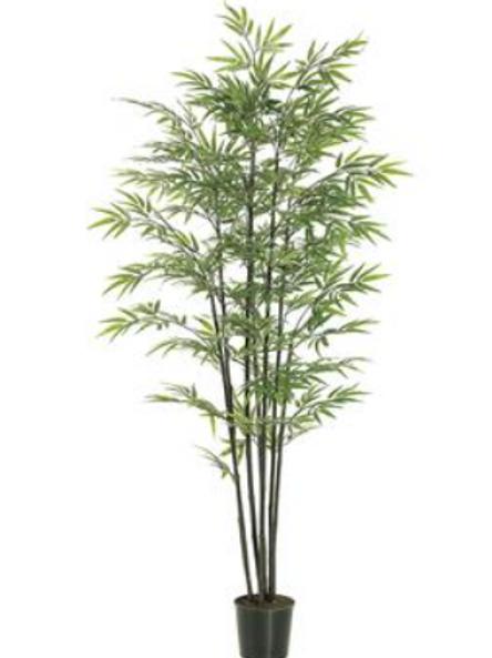 BK Bamboo Tree 6'