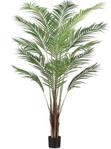 Areca Palm Tree in Pot 6'