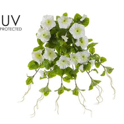 "UVPRO Petunia HG/BU X12 20"" WH"