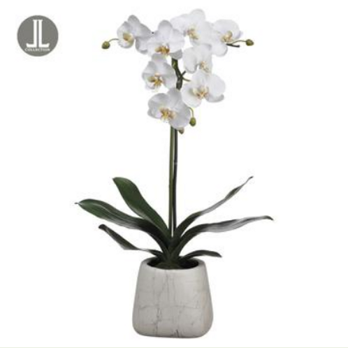 "Phalaenopsis Orchid Plant in Marble Look Pot White 30""H"