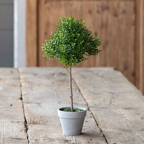 Potted Thyme Topiary