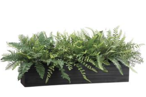 Mixed Fern in Wood Box 16""