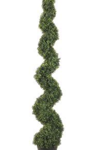 Spiral Boxwood Topiary 6' Green
