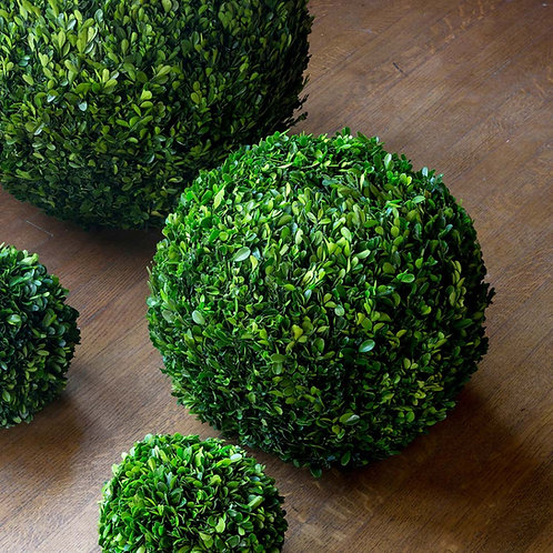 Preserved Boxwood Ball, 16""