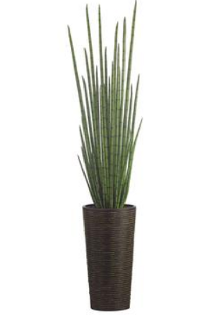 Snake Plant in Bamboo/Rope Container 84""