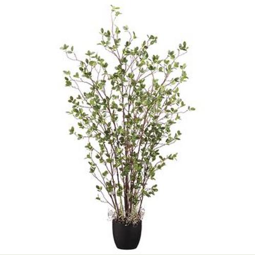 "Mini Leaf Plant in Pot GR 60"""