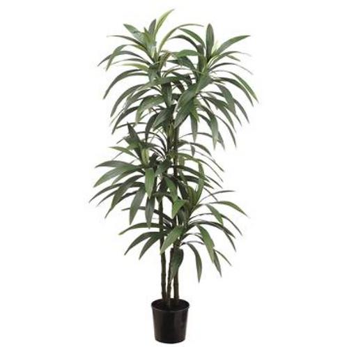 Yucca Plant 6'