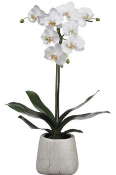 """Phalaenopsis Orchid Plant in Marble Look Pot 30"""""""