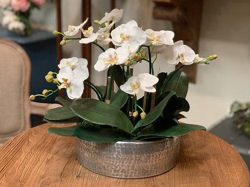"""Phalaenopsis in Aluminum Planter 16""""H"""