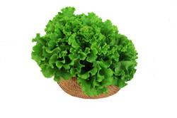 green+lettuce