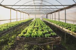 CLEAN FARM PREMIUM VEGETABLE FARM
