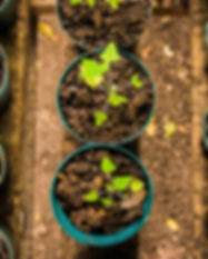 farmtotable.jpg