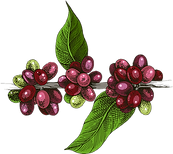 coffeebranch_edited_edited.png