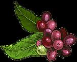 cherry-leftside.fw.png