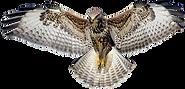 Hawk-PNG.png