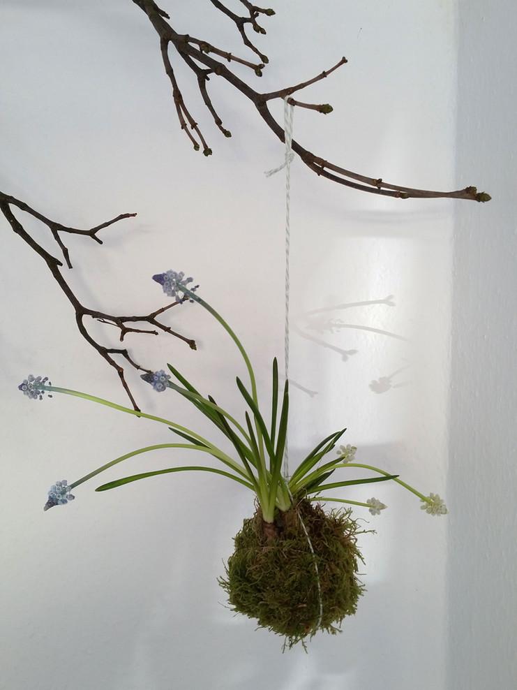Kokedama: Bringt Blüten zum Fliegen