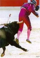 Bull meet groin.jpg