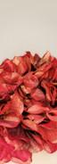 Burgundy metallic hydrangea cascade set