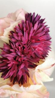 Purple chrysanthemum and pink gladioli (