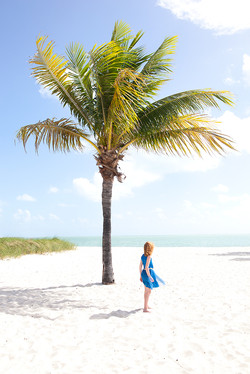 Miami_palme