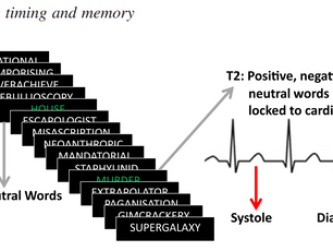 What the heart forgets: Cardiac timing influences memory for words and is modulated by metacognition