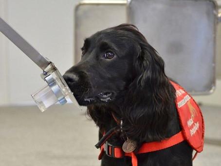 Cachorros detectores de câncer