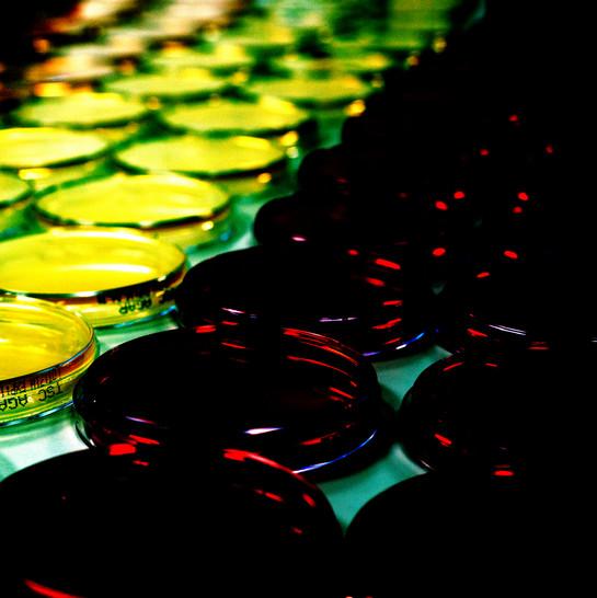 _DSC2004art - Cópia.jpg