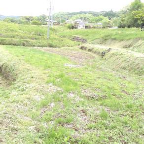 草刈りと筍と壁塗り