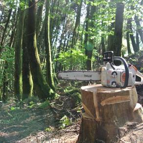 伐採講習とジビエBBQ