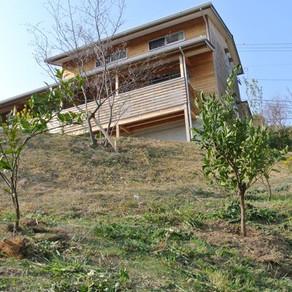 果樹の植栽