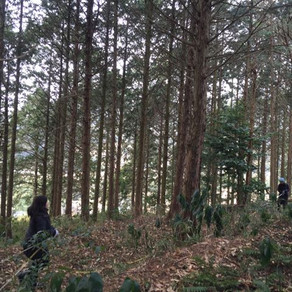 森の下見と鹿肉料理