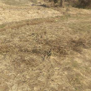 自然農田んぼ畝立て⑨ 環境整備