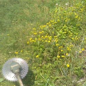 田んぼの草刈り 考察
