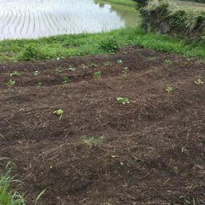 畑&草刈りDAY