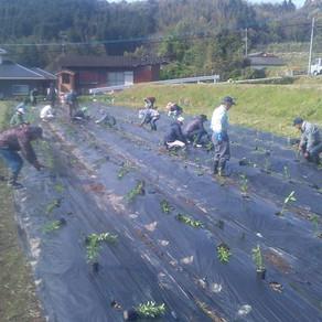 地域の農作業