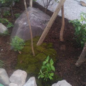 旅館お庭工事20