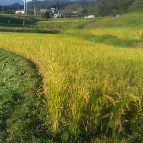 農地の今後 草刈り