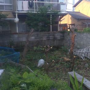 果樹の伐採・お庭現調