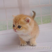 Lusy-mur Kassandra.jpg