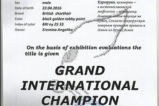 Grand Inter Champion1_edited_edited.jpg